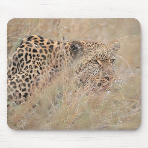 Prowling Leopard Hiding in Grassland Mouse Pad