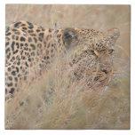 Prowling Leopard Hiding in Grassland Large Square Tile