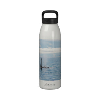 Prowling Orca Water Bottles
