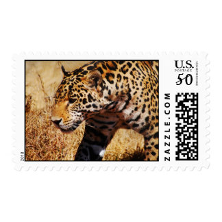 Prowling Postage