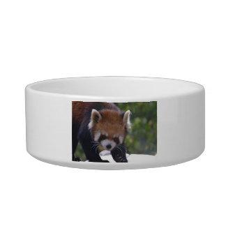 Prowling Red Panda Bowl