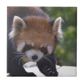 Prowling Red Panda Ceramic Tile