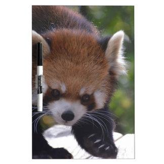 Prowling Red Panda Dry Erase Board