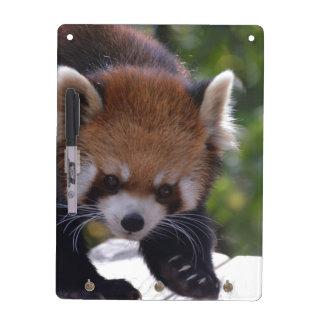 Prowling Red Panda Dry-Erase Board