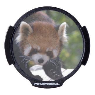 Prowling Red Panda LED Window Decal