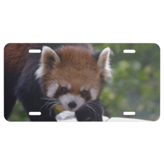 Prowling Red Panda License Plate
