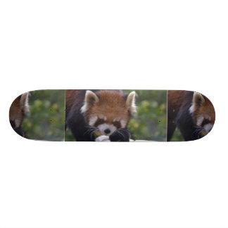 Prowling Red Panda Skateboard Deck
