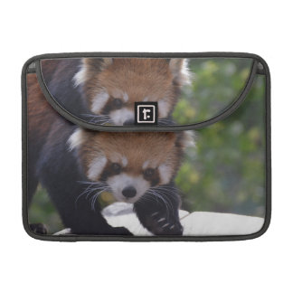 Prowling Red Panda Sleeve For MacBooks