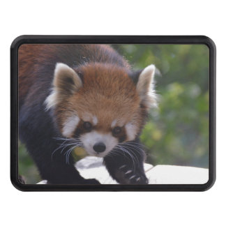 Prowling Red Panda Trailer Hitch Cover