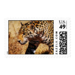 Prowling Stamp