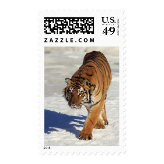 Prowling Tiger Stamps
