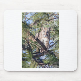 Prowling Wild Cat Mouse Pad