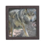 Prowling Wolf Small Gift Box Premium Trinket Box