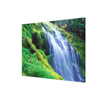 Proxy Falls in the central Oregon Cascades. Stretched Canvas Print