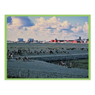 Prudhoe Bay, Alaska Postcard