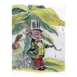 Prueba del conejo para las gotas de agua postales
