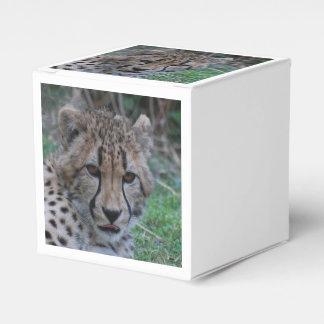 Prueba del guepardo caja para regalos de fiestas