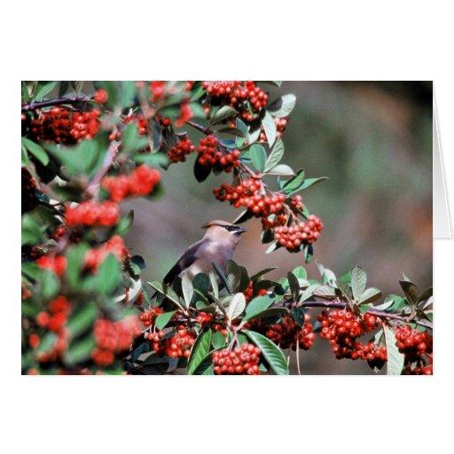 Pruebe el pájaro con el acebo rojo balls394 tarjetón