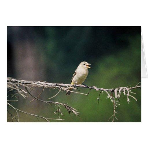 Pruebe el pájaro en el miembro, 392 tarjeta de felicitación