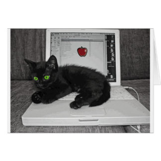 Prunella black cat lounging on laptop card
