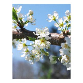 Prunus Blossom Letterhead Template