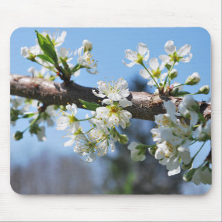 Prunus Blossom Mousepad