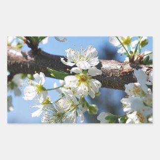 Prunus Blossom Rectangular Stickers