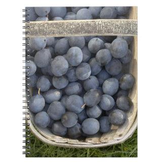 Prunus domestica, Damsons Notebooks