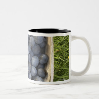 Prunus domestica, Damsons Two-Tone Coffee Mug
