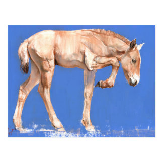 Przewalski Foal 2012 Postcard