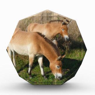 Przewalski horses award