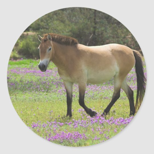 Przewalskii Horse Classic Round Sticker