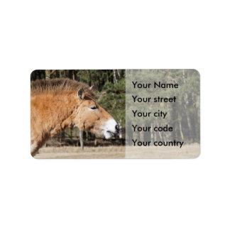 przewalski's horse label