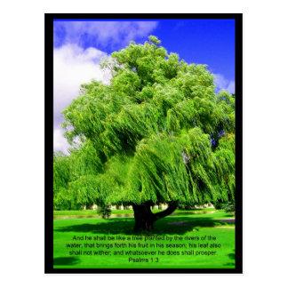 Psalms 1:3 Tree Postcard