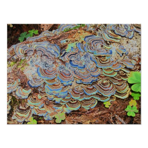 psychedelic fungus growing on a tree poster
