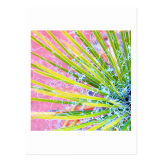 Psychedelic Yucca Postcard