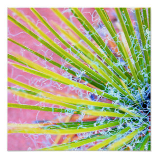 Psychedelic Yucca Poster