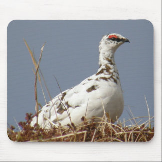 Ptarmigan in Early Spring Mousepads