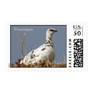 Ptarmigan in Early Spring Postage