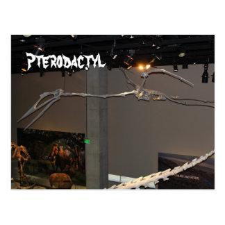 Pterodactyl Postcards