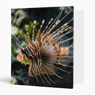 Pterois Antennata Broadbarred Firefish Lionfish 3 Ring Binders