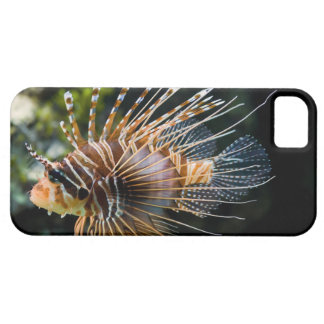 Pterois Antennata Broadbarred Firefish Lionfish iPhone SE/5/5s Case