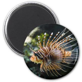Pterois Antennata Broadbarred Firefish Lionfish Magnet