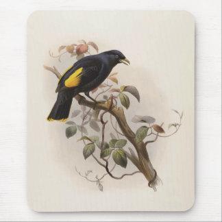 Ptilorhynchus rawnsleyi - Rawnsley's Bower-bird Mouse Pad