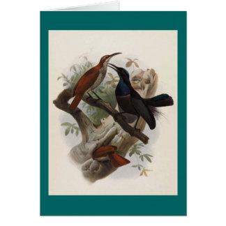 Ptiloris magnificus - Magnificent Rifle-bird Card