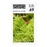 Ptilum crista-castrensis postage stamps
