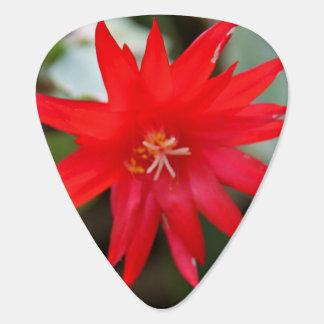 Púa de guitarra del cactus de pascua