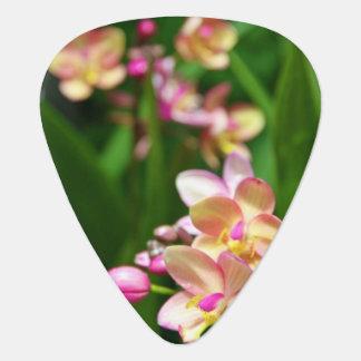 Púa de guitarra del Orchidaceae