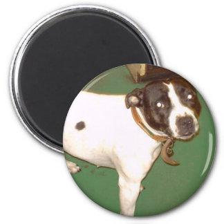 Pub Dog 1 2 Inch Round Magnet