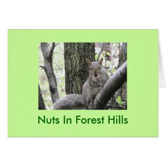 Pucci pega una actitud, nueces en Forest Hills Tarjeta De Felicitación